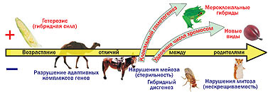 ГЕТЕРОЗИС
