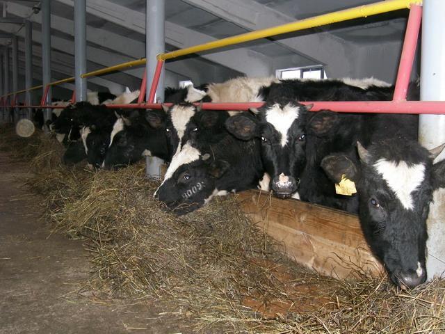 работа в асино животноводство